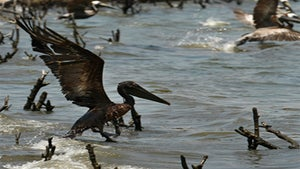10 Things You Should Know About the Gulf Oil Spill