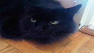 Adventures of a Singlista: Cat Woman