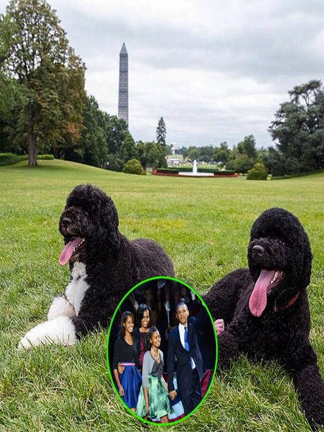 Photo Fab: The Obamas Welcome a New Family Member