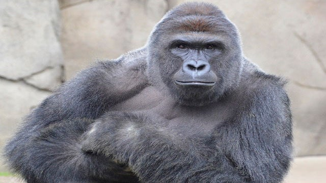 Here's How Celebrities Reacted to the Gorilla Shooting at the Cincinnati Zoo