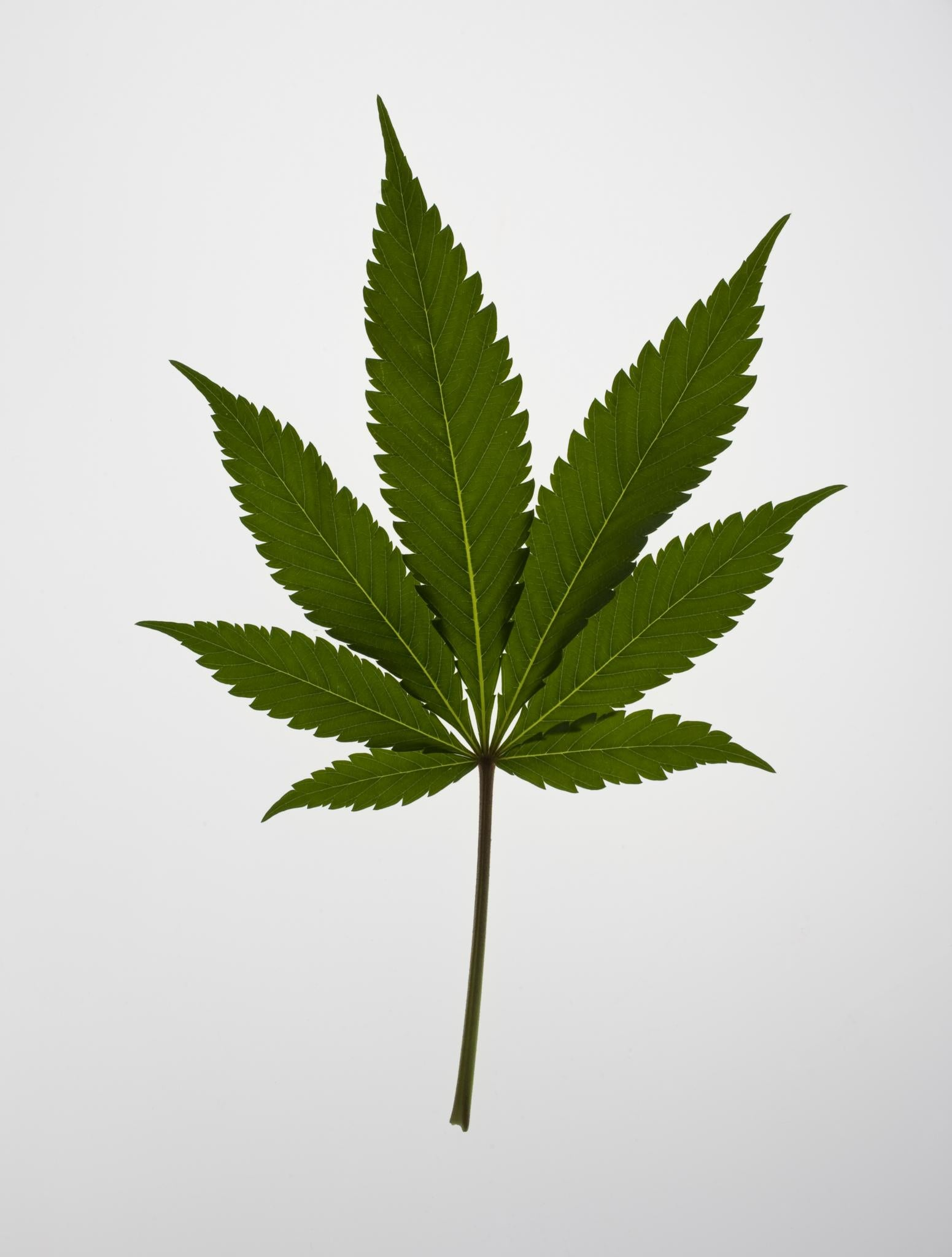 Atlanta City Council Votes To Decriminalize Marijuana