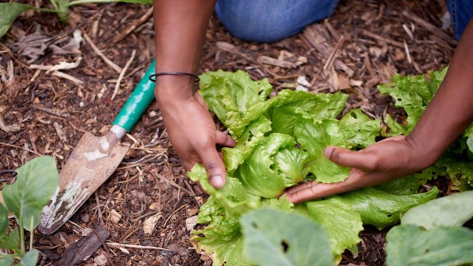 Gardening While Black: 3 White Women Accuse Black Man of Stalking, Being A Pedophile
