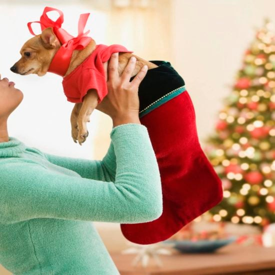 #BuyBlack Gift Guide: 10 Gifts For The Pets On Your List