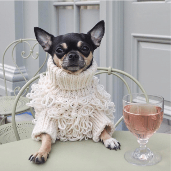 Furry And Fly! 8 Items That Will Keep Your Dog Stylish From Head To Tail