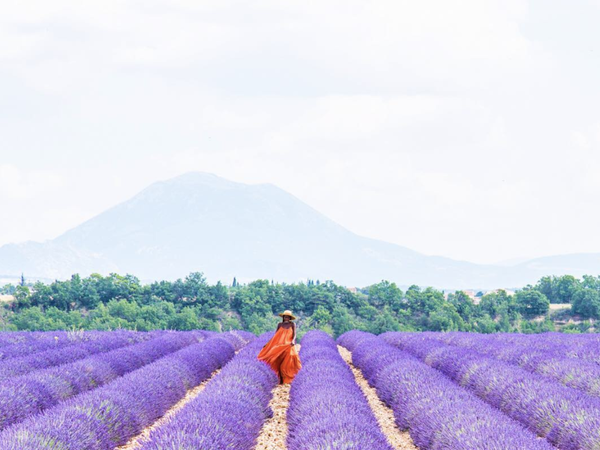 Black Travel Moment of the Day: This Lavender Moment In France Has Us Longing For Summer