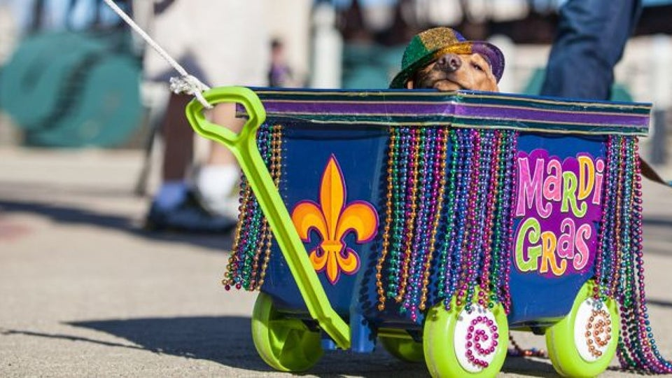 Headed To NOLA For Mardi Gras? Check Out What's Also Happening In Baton Rouge, Shreveport & Lafayette