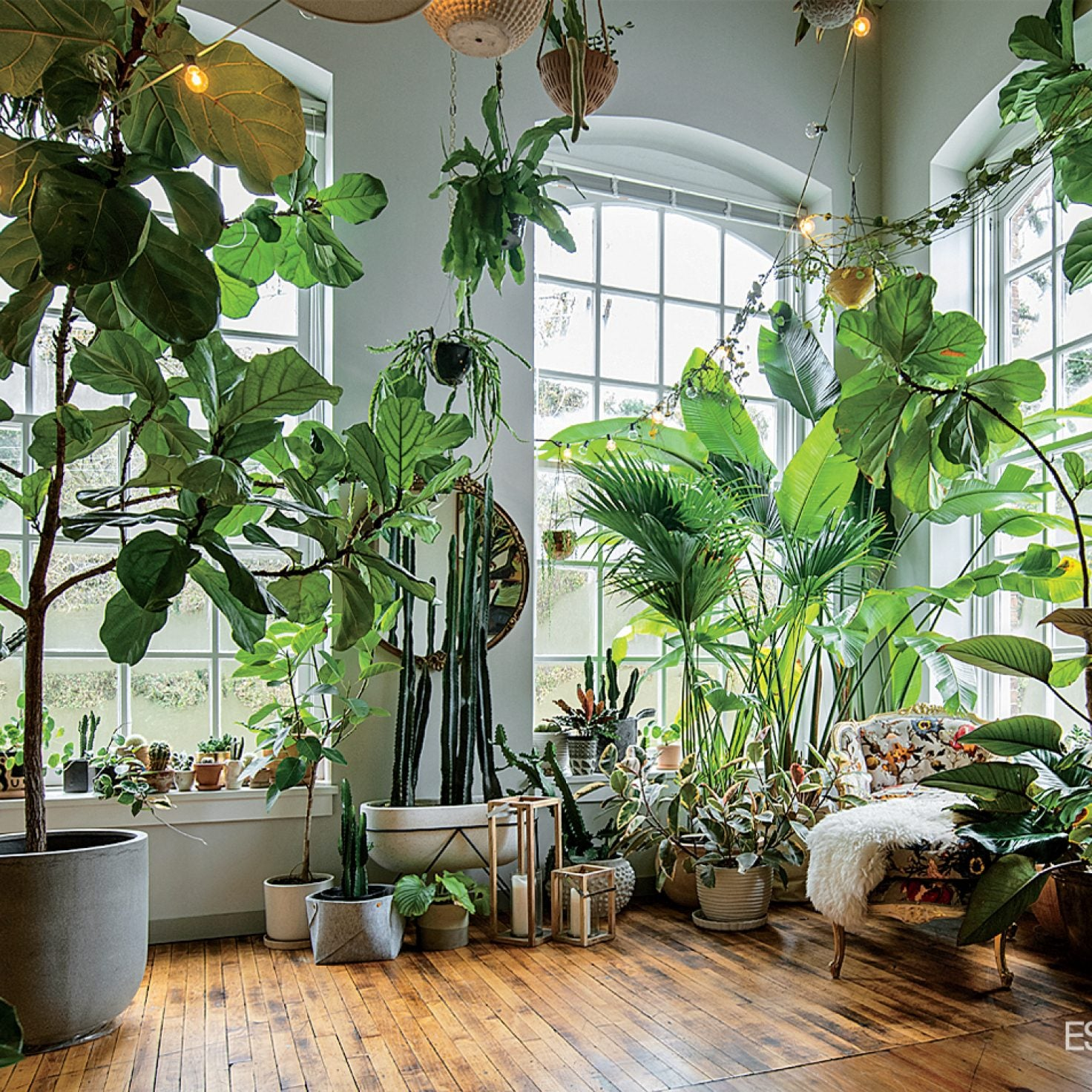 Plant Stylist Hilton Carter Creates Homes That Will Make You Green With Envy