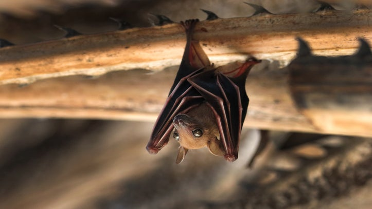 No, Senator Cornyn, Bats Are Not To Blame For COVID-19. That's On Humans