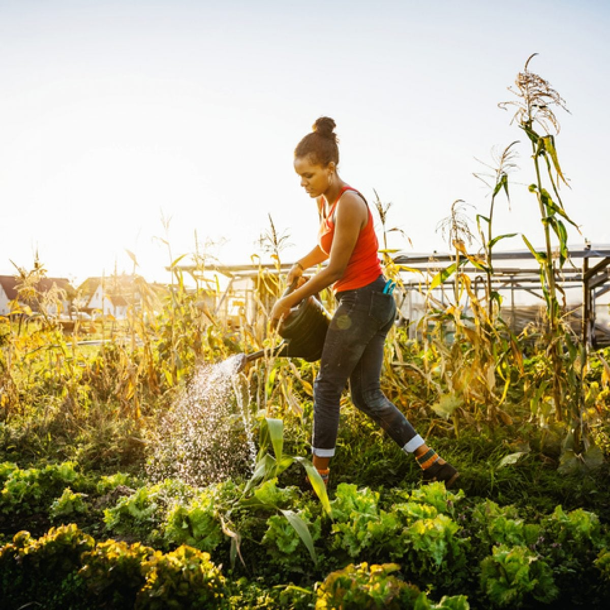 Just Bees And Things And Flowers: How Black Women Gardeners Will Survive In The COVID-19 Crisis