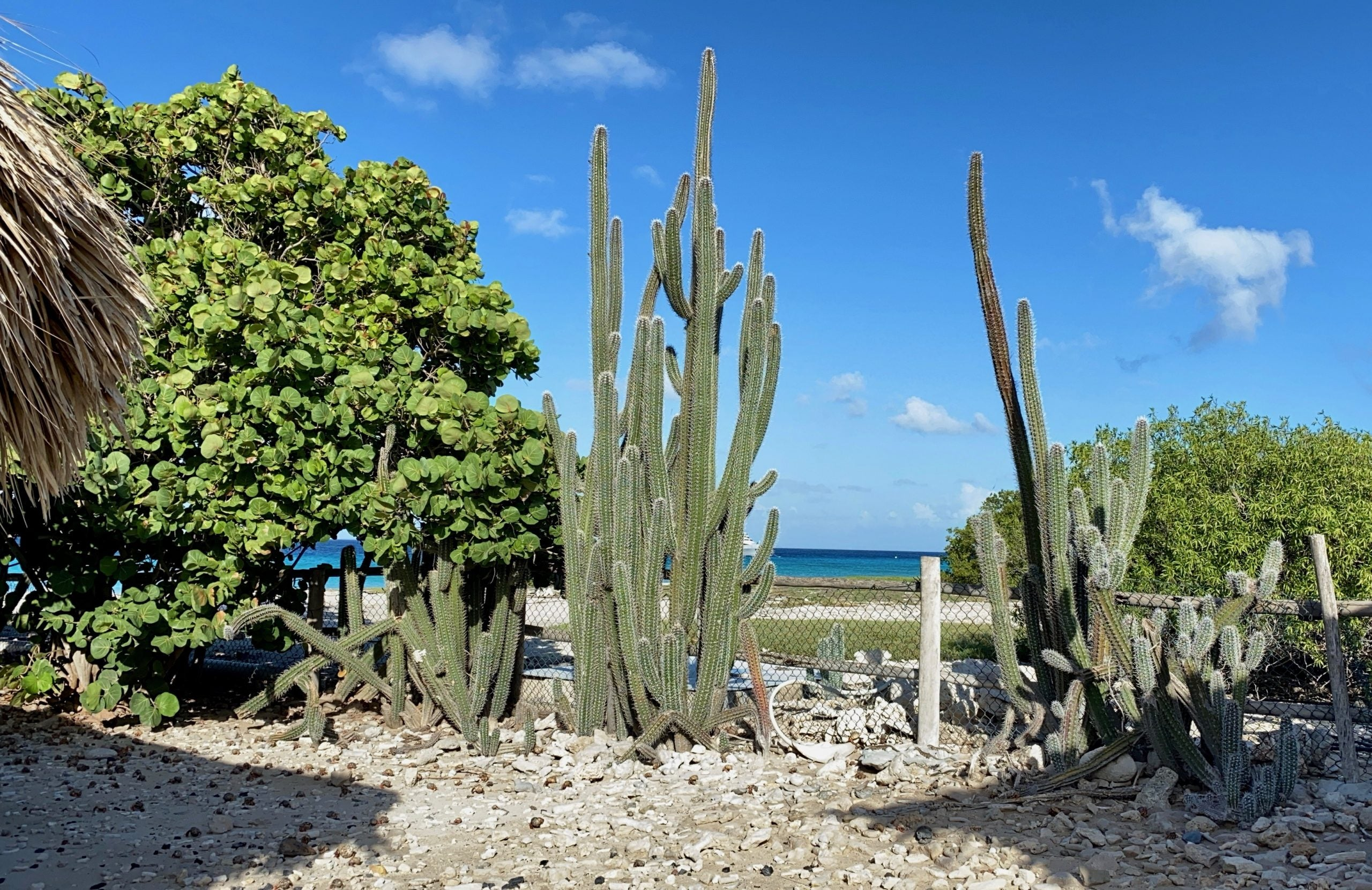 Scenery in Curacao