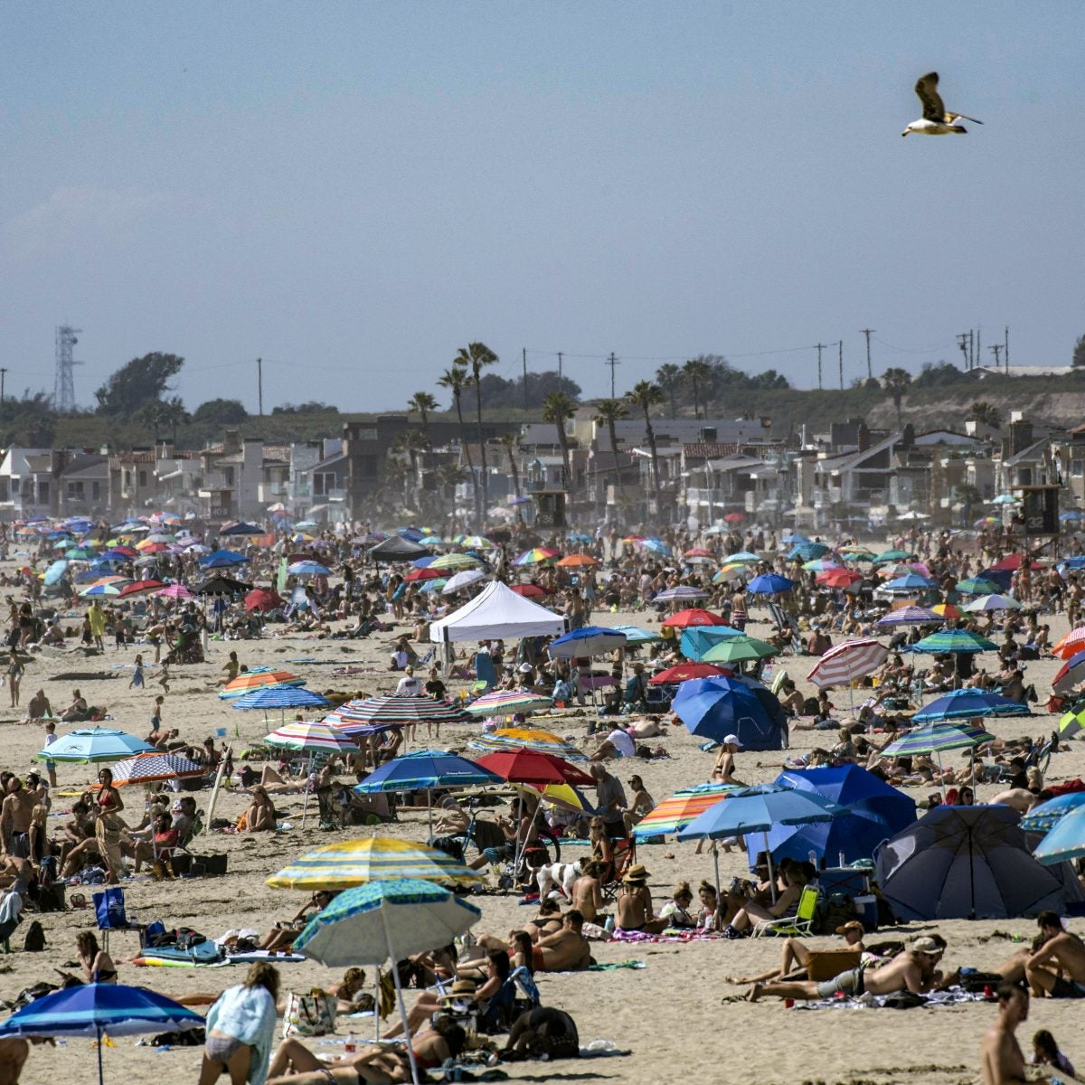 California Governor To Order Close Of All Beaches, All State Parks