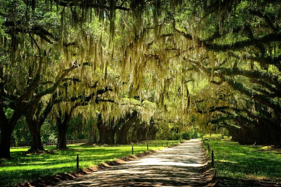 Get Lost: 72 Hours Exploring Charleston's Southern Charm