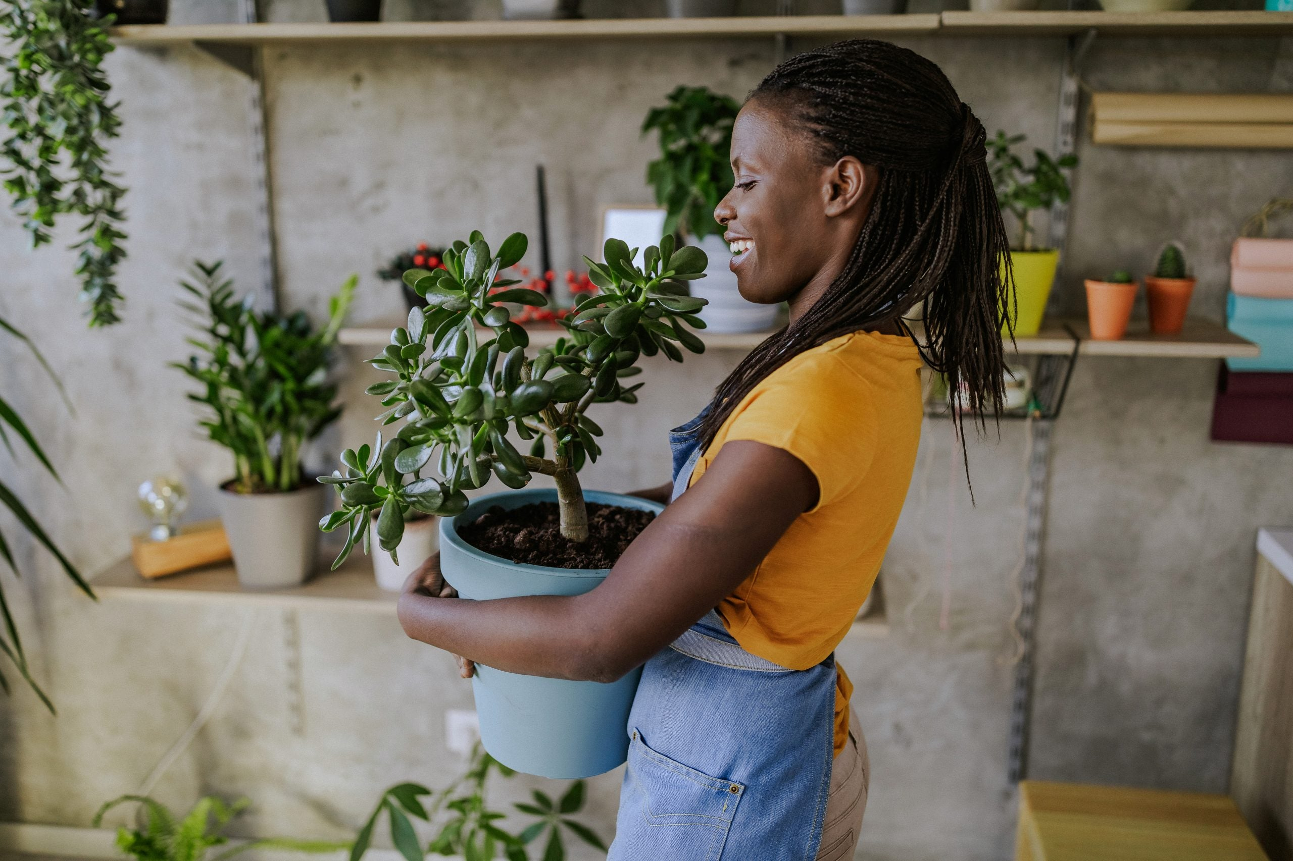11 Things To Know Before Buying Your First Houseplant Baby