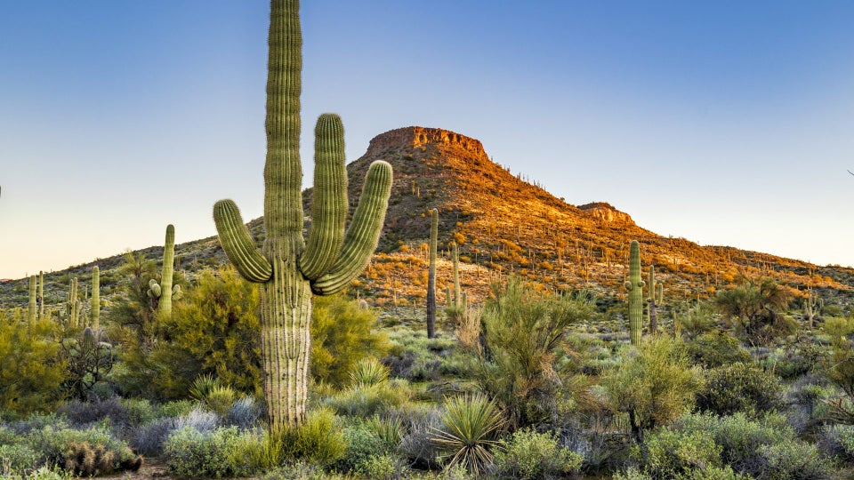 Get Lost: A Socially Distant 72 Hours In Scottsdale